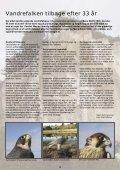 Vandrefalken på Møns Klint - Ørnereservatet - Page 4
