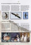 Vandrefalken på Møns Klint - Ørnereservatet - Page 5