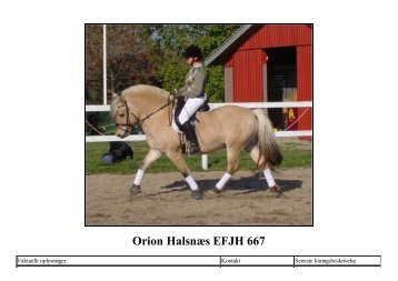 Orion Halsnæs