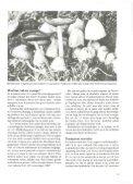 Heraldik og svampe - Page 7
