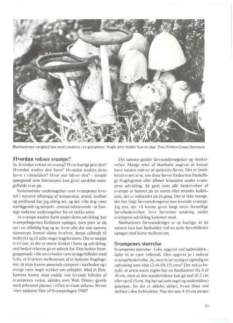 Heraldik og svampe