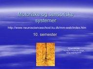 Motoriske og sensoriske systemer - Neuroscience