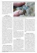Grevlingen nr. 3 - 2008 - Norges Naturvernforbund - Page 7