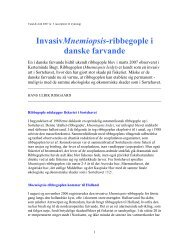 InvasivMnemiopsis-ribbegople i danske farvande - AquAliens