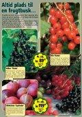 Sensommeren/efteråret er den helt rigtige plantetid... Når ... - Callnet - Page 4