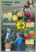 Sensommeren/efteråret er den helt rigtige plantetid... Når ... - Callnet - Page 5