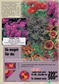 Sensommeren/efteråret er den helt rigtige plantetid... Når ... - Callnet - Page 7
