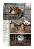 Skinnet bedrar - Dyrebeskyttelsen Norge - Page 7
