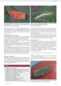 Frugt og Grønt Juni 2009 - Gartneribladene - Page 5