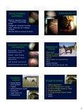 Mavesår hos heste - Page 4