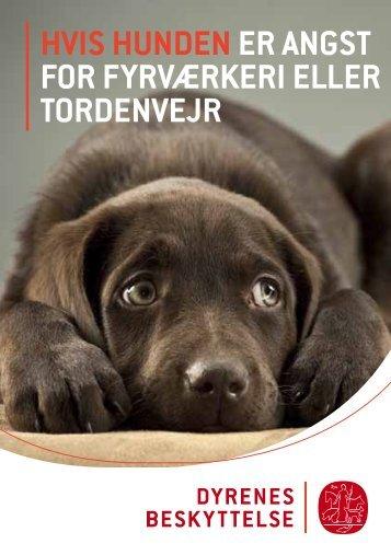 Hvis hunden er angst for fyrværkeri eller tordenvejr - Dyrenes ...