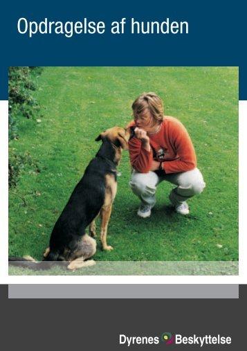 Opdragelse af hunden - Kennel Netesminde
