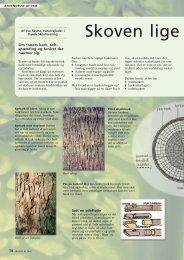 Læs mere om bark - Dansk Skovforening