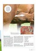 – en livsstilssygdom hos heste? - E-vet - Page 4