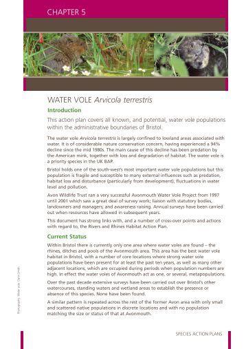 Water vole (pdf, 128 KB)