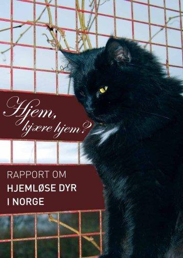 Rapporten Hjem, kjære hjem - Dyr uten hjem