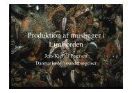 Produktion af muslinger i Limfjorden