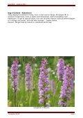 Gotland standard 2012.pdf - Scanbird - Page 5