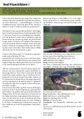 FlueFisker - Federation of Fly Fishers Denmark - Page 6