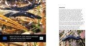 beskyttelse af stor vandsalamander i den østlige baltiske ... - Europa