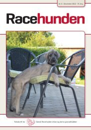 Racehunden - Dansk Racehunde Union