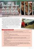Israels nedslidte æsler får ro i økologiske ... - WSPA Danmark - Page 3
