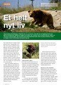 Israels nedslidte æsler får ro i økologiske ... - WSPA Danmark - Page 4