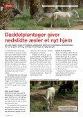 Israels nedslidte æsler får ro i økologiske ... - WSPA Danmark - Page 6
