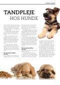 HUNDENS TÆNDER - Dyrefondet - Page 3