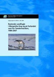Rastende vandfugle i Margrethe Kog og på forlandet vest for ...