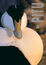 Læs særnummer fra PITU om ederfugl her - Grønlands Naturinstitut