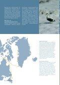 Læs særnummer fra PITU om ederfugl her - Grønlands Naturinstitut - Page 4