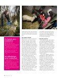 Fra 12. sal til landboliv med dyr og - Marott Kommunikation - Page 3