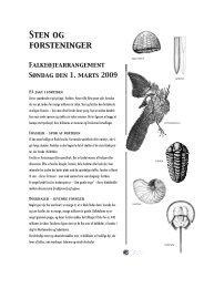 Sten og fossiler - Naturhistorisk Museum