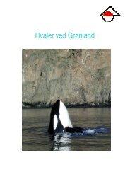 Hvaler ved Grønland