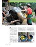 SKILÆNGSEL? - Elephant Hills - Page 4
