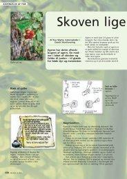 Læs mere om eg - Dansk Skovforening