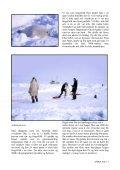 ISFLAKET - Ishavsmuseet Aarvak - Page 7