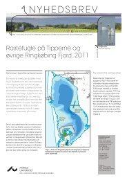 Rastefugle på Tipperne og øvrige Ringkøbing Fjord, 2011
