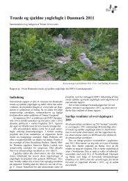 Truede og sjældne ynglefugle i Danmark 2011 - Dansk Ornitologisk ...