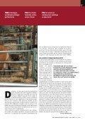 veaux sous la mère recherchent éleveurs - Veau sous la Mère - Page 2