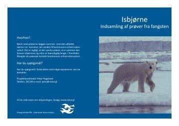 Download folderen Isbjørne - indsamling af undersøgelser her