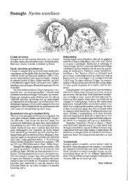 Åpne PDF utgave - Norsk Ornitologisk Forening