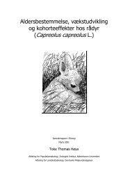 (Capreolus capreolus L.)
