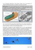 Brevduens flyvemuskler - Dansk Brevduesport - Page 7