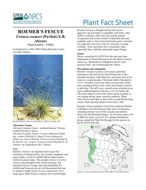Plant fact sheet for Roemer's fescue - USDA Plants Database