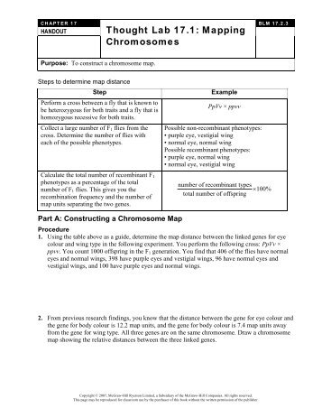 Gene Mapping Worksheet Free Worksheets Library   Download and ...