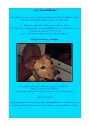 1-01/08/10 Braken bij honden - Bloggen.be