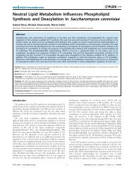 Neutral Lipid Metabolism Influences Phospholipid Synthesis and ...