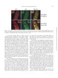 Arabidopsis Dynamin-Like Protein 2a (ADL2a) - Plant and Cell ... - Page 4